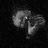 consigliere_tom icon