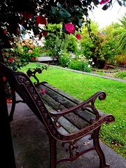Garden bench under the bougainvillea (Photo Trunk) Tags: garden bench relax chair seat bougainvillea rest uploaded:by=flickrmobile colorvibefilter flickriosapp:filter=colorvibe