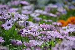 ~2015 (mawingchung,,) Tags: china park flower macro hongkong nikon hong kong   kowloon        d800e