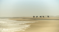 Römö - Riders in the storm (Pana53) Tags: horses storm beach strand island sand nikon wasser outdoor insel northsea reiter ufer landschaft pferde dänemark danmark nordsee riders küste dünen sturm römö jütland sandsturm nikond810 pana53 photographedbypana53