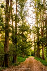Bosque de Rauch (Nicols Mancini) Tags: bosque camino provinciadebuenosaires rauch verde tarde primavera