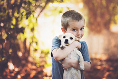 A Boy and His Dog ((Sarah Robinson)) Tags: child childhood dog puppy hug kid outdoors bokeh fall green red orange yellow nikon d750 105mm