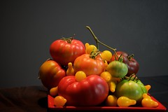 Tomato Harvest Still Life (The Good Brat) Tags: co us stilllife tomatoes tomato color