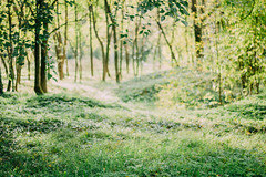 Green Dreams (freyavev) Tags: green greenery park trees light leaves autumn topcider serbia belgrade beograd srbija vsco 50mm niftyfifty mikasniftyfifty canon canon700d outdoor