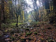 Hönnetal creek, moss and light IV