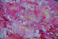 DSC_0061 (Rinswid) Tags: feldman ecopark park nature flowers