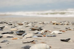Brigantine Beach (KaDeWeGirl) Tags: newjersey brigantine beach shore shells waves atlantic ocean