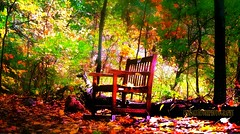 HBM some where in a tiny forest (frptlady....) Tags: benches trails autumn2016 kmsalvatorephotography leaves rustic fujixt10