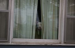 Dogs get lonely too (candiceshenefelt) Tags: dog window lonely reflections sad loneliness sadness