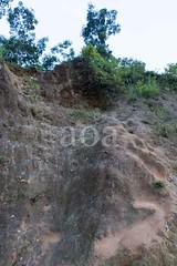 H50$-3571 (bandashing) Tags: erosion green trees teagarden sylhet manchester england bangladesh bandashing aoa akhtarowaisahmed socialdocumentary