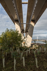 Oct2016_005 (Jistfoties) Tags: forthbridges newforthcrossing queensferrycrossing pictorialrecord forth southqueensferry construction civilengineering
