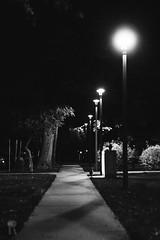 Walking in the Dark (Ryan Marx) Tags: dark night evening light post lamp street orb bright black white tree sidwalk grass college campus leaves fall cold illuminated path leading lines grain noise film digital look