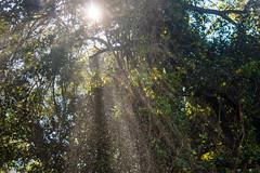 J21. Victoria Falls (Darth Jipsu) Tags: victoriafalls matabelelandnorthprovince zimbabwe zw chutes victoria chutesvictoria zambezi fleuve rivire safari afrique voyage
