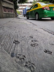 Bangkok - paw prints (ashabot) Tags: artifact bangkok dogs world