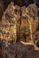 (Joseph M. Campbell) Tags: brycecanyonnationalpark