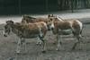 Was dich die Gans nicht lehrt, das lerne vom Esel! (DOKTOR WAUMIAU) Tags: nikon d7200 ishootraw vscofilm lightroom sigma150600c tierpark berlin esel