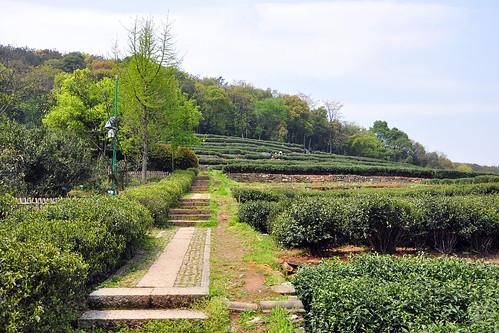 Hangzhou - Tea Museum
