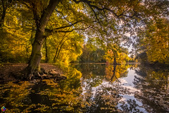 Golden autumn 10 (JTPhotography) Tags: autumn golden leaves trees nature water reflections sunny wildlife rivers lake panasoniclumixg6 olympus918mm