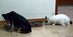 Los Hermanitos Thrall y Katrina (MariaTere-7) Tags: animales mascotas hermanos perro gato caracas venezuela maratere7