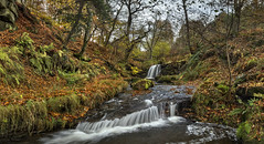 Blow Gill waterfall November 2016 # 1 (Katybun of Beverley) Tags: blowgillwaterfall hawnby yorkshiremoors northyorkshiremoors waterfall landscape longexposure autumn autumnal tree trees