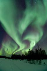Nights under the Aurora (adamhillstudios) Tags: auroraborealis north northwestterritories northernlights canada canon 1635mm forest adventure tourism winter cold travel outdoors outdoorlife