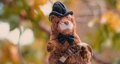 The Guardian of my Steering Wheel (anibalurea) Tags: nikon bear toy steeringwheel wheel bokeh love