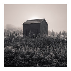 Shelter (Dylan Nardini) Tags: morning november scotland winter mist frost clydevalley 2016 landscapes light snow