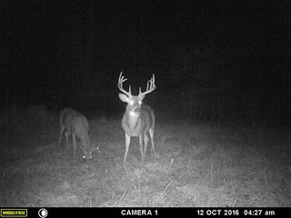 Kentucky Whitetail Hunt 25