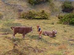 BRAUNVIEH (BV), Schweiz / Switzerland / Suiza. (cosmosminimus, dioramas 1:87 (H0)) Tags: model diorama 187 h0 rinder rassen cattle breed razas ganado rinderrassen braunvieh bv
