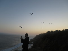 IMG_4810 (pbinder) Tags: 2016 201606 20160622 june jun wednesday wed california ca socal cal southern cali socali los angeles la laca el matador elmatador state beach statebeach elmatadorbeach elmatadorstatebeach patrick malibu maca