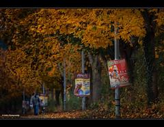 Herbstzeit (geka_photo) Tags: gekaphoto klausdorf schleswigholstein deutschland herbst herbstzeit plakat bunteslaub brgersteig spaziergnger hund street streetphotography