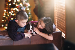 (Rebecca812) Tags: children dog bostonterrier christmas sweet cute candid happiness love care responsibility home livingroom window sunlight christmastree boy girl family twinklelights festive portrait lifestyle rebecca812 canon