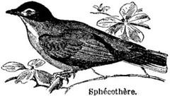 Anglų lietuvių žodynas. Žodis sphecotheres reiškia <li>sphecotheres</li> lietuviškai.