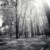 The light of nature (Massimo Margagnoni) Tags: world trip trees blackandwhite bw italy white black art 6x6 nature forest landscape poetry solitude alone photographer natura hasselblad dreams poesia viaggi nero paesaggio biancoenero massimo 2012 mkii mondo foresta naturepoetry absoluteblackandwhite bestcapturesaoi margagnoni