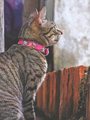 looking forward (rodrigofigueiredo) Tags: pet animal cat feline looking textures gato future felino texturas forward futuro frente olhe diante