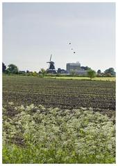 (raymnd) Tags: flowers mill birds landscape flying spring vogels lente bloemen molen weiland achterhoek landschap vragender pastureland