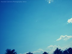 118 (Fiorella C.) Tags: sky clouds buenosaires palmeras palm cielo palmtree nubes lightblue celeste parquenorte