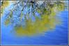 Reflexos de primavera - Spring reflections (Lombo Gordo) Tags: primavera water yellow reflections spring agua amarillo reflexos reflejos auga allxpressus