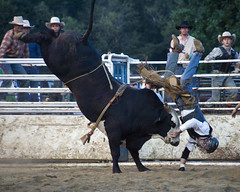 "Bullrider Todd Phillips (2) <a style=""margin-left:10px; font-size:0.8em;"" href=""http://www.flickr.com/photos/78391478@N08/8793035599/"" target=""_blank"">@flickr</a>"