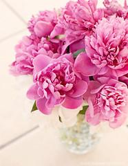 Peonies (basimmons) Tags: pink spring bloom peonies