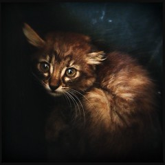 Dentro un porta vaso (Isabella Pirastu) Tags: cats baby cat kitten gatto gatti cucciolo