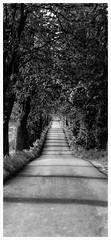 Fævejen (Bo47) Tags: road trees blackandwhite vertical denmark europe stitch geotag 2012 verticalstitch møn nikkor85mmf18 vertorama nikond800