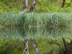 K (All Shine) Tags: life trees light plants reflection green nature water colors beautiful composition landscape photography graphics poetry outdoor ngc expressions foliage illusion imagination impressions ponds impressionsexpressions
