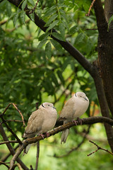 Day 61 - Let's face the rain together (Alexandru Georgescu) Tags: bird nature canon photography pigeon pigeons 7d 70200