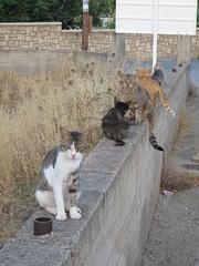IMG_2992 (JohnnyDalmas) Tags: vacation cats holiday greece stray rhodes lindos lardos greekcats