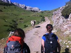 Colonias de Verano Pyrene_Camp Aventura (Club Pyrene) Tags: summercamp aventura lacerdanya pirineu travessa pyrene campamentos sostenible coloniesestiu