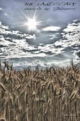Weizen 4_HDR (peter pirker) Tags: sky cloud canon landscape austria sterreich himmel wolken krnten carinthia landschaft dri hdr dynamik weizen seeboden peterfoto eos550d peterprirker