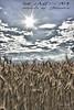 Weizen 4_HDR (peter pirker) Tags: sky cloud canon landscape austria österreich himmel wolken kärnten carinthia landschaft dri hdr dynamik weizen seeboden peterfoto eos550d peterprirker