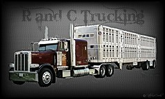 Peterbilt 389 (ccfabulous) Tags: truck transportation wilson trailer livestock trucking peterbilt 389 bullrack randc