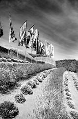 Eden (Nick Jacobsen (nickjoj)) Tags: white black monochrome project cornwall flags eden domes biomes